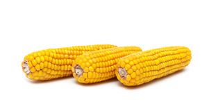 Ripe ears of corn on a white background close-up Stock Images