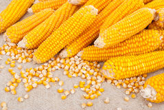 Free Ripe Ears Of Corn Stock Images - 27062824