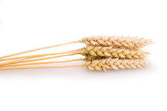 Ripe ears of wheat Stock Images