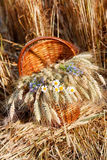 Ripe ears wheat and wildflowers in basket Royalty Free Stock Photography