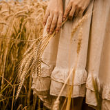 Ripe ears wheat in woman hands Stock Photo