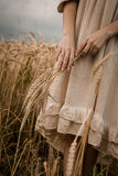 Ripe ears wheat in woman hands Royalty Free Stock Photos