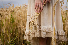 Ripe ears wheat in woman hands Stock Photos
