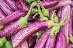 Ripe eggplant Stock Photos
