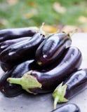 Ripe eggplant Stock Photos