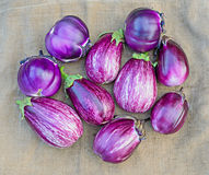 Ripe eggplants on a sacking background Stock Photos