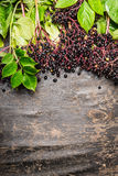 Ripe elderberry on branches with leaves on rustic wooden background, top view, border Royalty Free Stock Photography