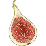 Ripe Fig in Cross Section Royalty Free Stock Image