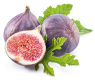 Ripe fig fruits. Royalty Free Stock Photos