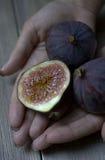 Ripe figs Royalty Free Stock Image