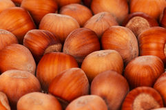 Ripe filberts Stock Photography