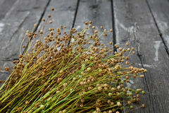 Ripe flax Royalty Free Stock Photography