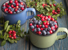 Ripe forest berries Stock Images