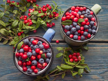 Ripe forest berries Royalty Free Stock Photos