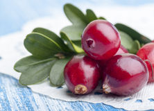 Ripe forest cranberries Stock Photo