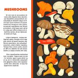 Ripe forest mushrooms of all edible species on promotional poster with sample text. Cartoon flat vector illustrations Natural harvest of organic food full of Stock Photography