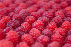 Ripe and freah raspberries background. Close-up Stock Images