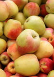 Ripe fresh apples Royalty Free Stock Images