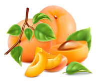 Ripe fresh apricots. Stock Image