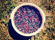 Ripe fresh blueberry Stock Image
