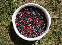 Ripe fresh blueberry Stock Photos