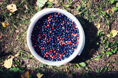 Ripe fresh blueberry Royalty Free Stock Photography