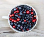 Ripe fresh blueberry Stock Photography