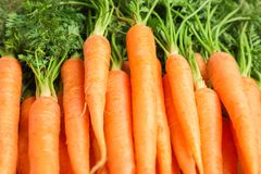 Ripe fresh carrots as background. Space for text stock photo