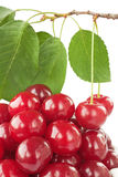 Ripe fresh cherry Stock Images