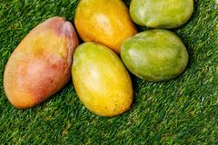 Ripe fresh colorful mango on a green background. Ripe fresh sweet colorful mango on a green grass royalty free stock images