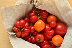 Ripe fresh colorful tomatoes Royalty Free Stock Photo