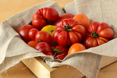 Ripe fresh colorful tomatoes Royalty Free Stock Images