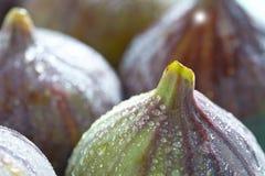 Ripe Fresh Figs Royalty Free Stock Image