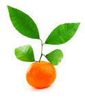 Ripe fresh mandarin Stock Photo