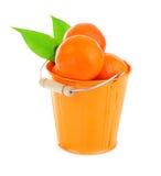 Ripe fresh mandarins Stock Images