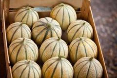 Ripe fresh melons box Stock Image