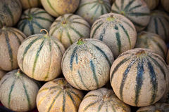 Ripe fresh melons pile in a farmers market Royalty Free Stock Images
