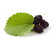 Ripe fresh Mulberry Stock Photos