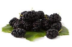 Ripe fresh Mulberry Stock Photo
