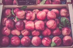 Ripe fresh nectarines in a farmers market Stock Images