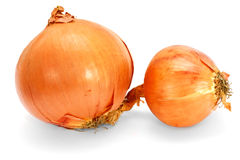 Ripe fresh onions  on white background. Composition of three fresh ripe onions on white background Stock Images