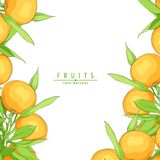 Ripe fresh oranges Royalty Free Stock Photos