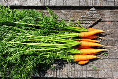 Ripe and fresh organic carrots Royalty Free Stock Images