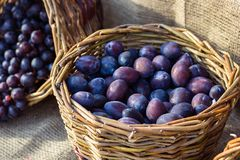 Ripe fresh purple organic plums in basket on the market. Harvest time. Fresh fruits shopping at the local outdoor farmers market. Close up stock images