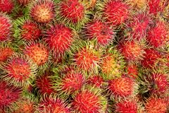 Ripe and Fresh Rambutans from the Market, Juicy Tropical Taste a. Nd Healthy Fruit Royalty Free Stock Photo