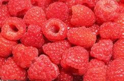 Ripe fresh raspberries Royalty Free Stock Image