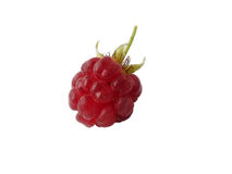 Ripe Fresh Raspberries On White Background. Berry Stock Photography