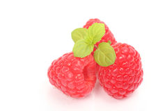 Ripe fresh raspberry with mint in closeup isolated over white.  Royalty Free Stock Images
