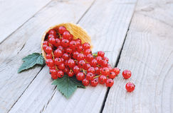 Ripe fresh red currants in ice cream waffle cone on rustic wooden background Stock Photography