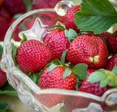 Ripe and fresh strawberries Royalty Free Stock Photo